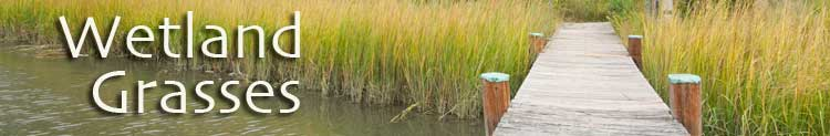Wetland Grasses
