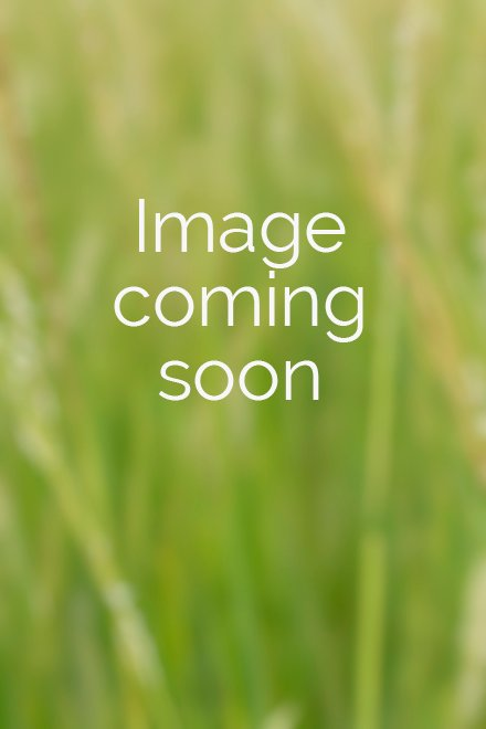 Eupatorium rotundifolium var. ovatum