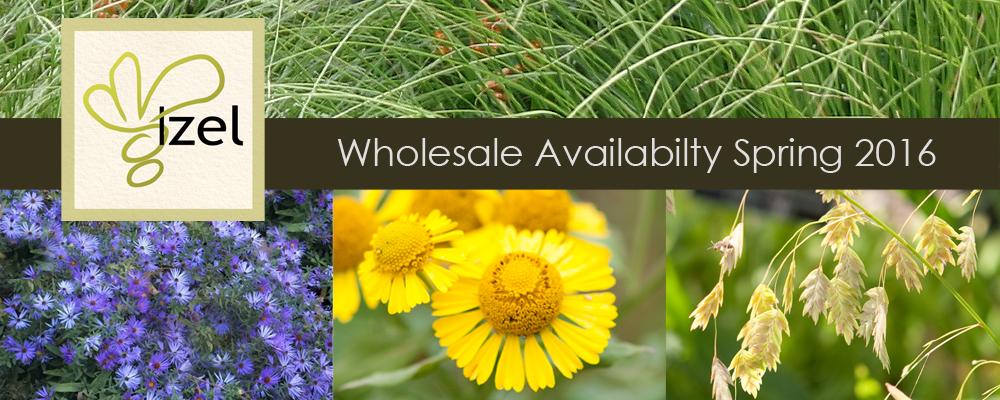 Wholesale 2016