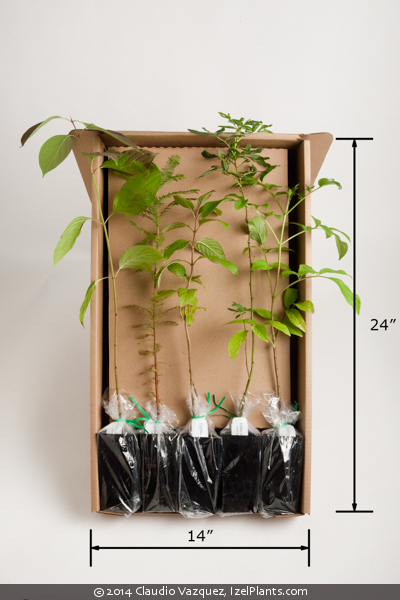 """Image of 2"""" x 5"""" Tree Band Pot Packaging"""